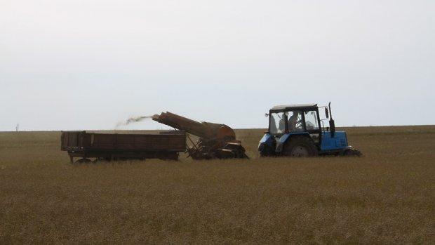 ВПодмосковье в2015-м году планируется убрать 320 тыс. тонн зерна